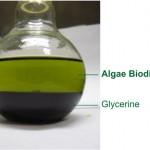 Biodiesel-and-Glycerine-from-Algae