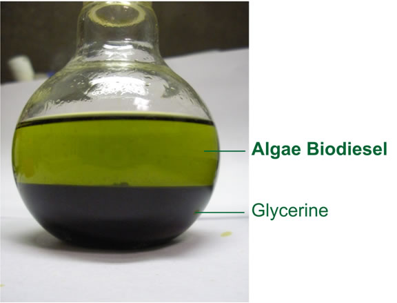 algae biodiesel Algae was an ingredient in the fuel that propelled the navy's green fleet in july the navy, along with the departments of energy and agriculture, has committed $510 million for the development of renewable, drop-in biofuels for the military algae, with its ability to produce an oil that mimics the properties of crude, could easily slip into.