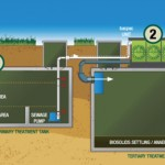 algae for waste water treatment