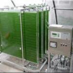 Flat plate photobioreactor