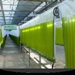 bubble column photobioreactor