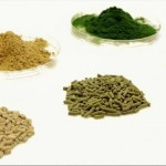 algae animal feed