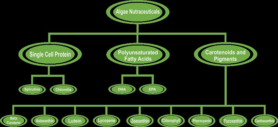 Comprehensive Algae Nutraceuticals Report - Algae