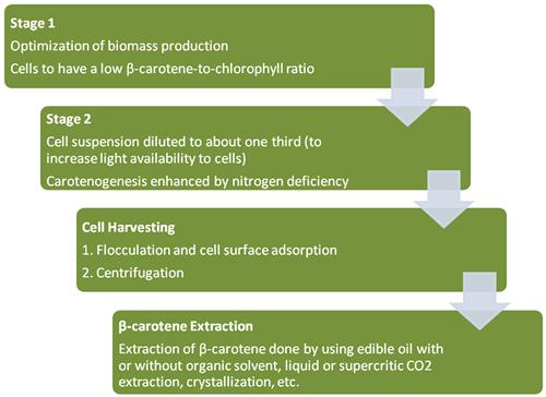 Beta-carotene Production and Extraction from Dunaliella salina