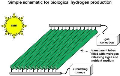Hydrogen from algae: - Oilgae - Oil from Algae