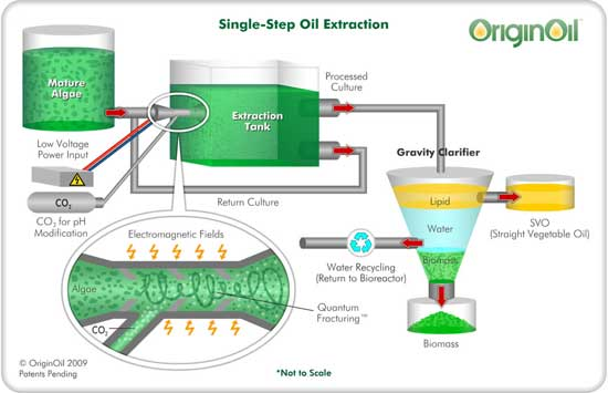 Algae oil extraction expellerpress solvent extraction the companys quantum fracturing technology combines with electromagnetic pulses and ph modification to break down cell walls and release oil from the algae ccuart Image collections