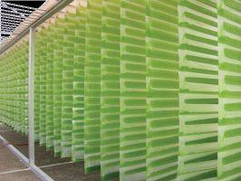 Vertical-column Photobioreactors